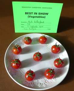 Wigginton Best in Show 2018