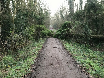 Ebury Way Tree Down